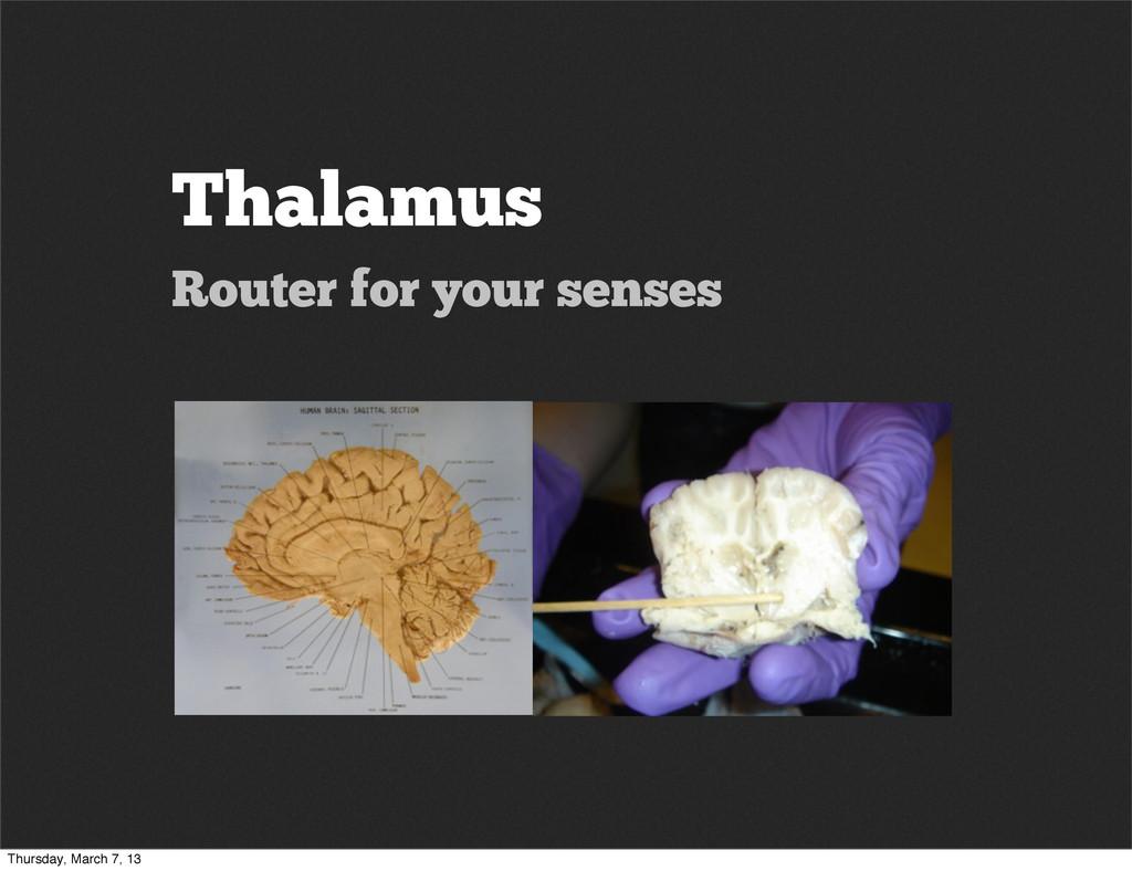 Thalamus Router for your senses Thursday, March...
