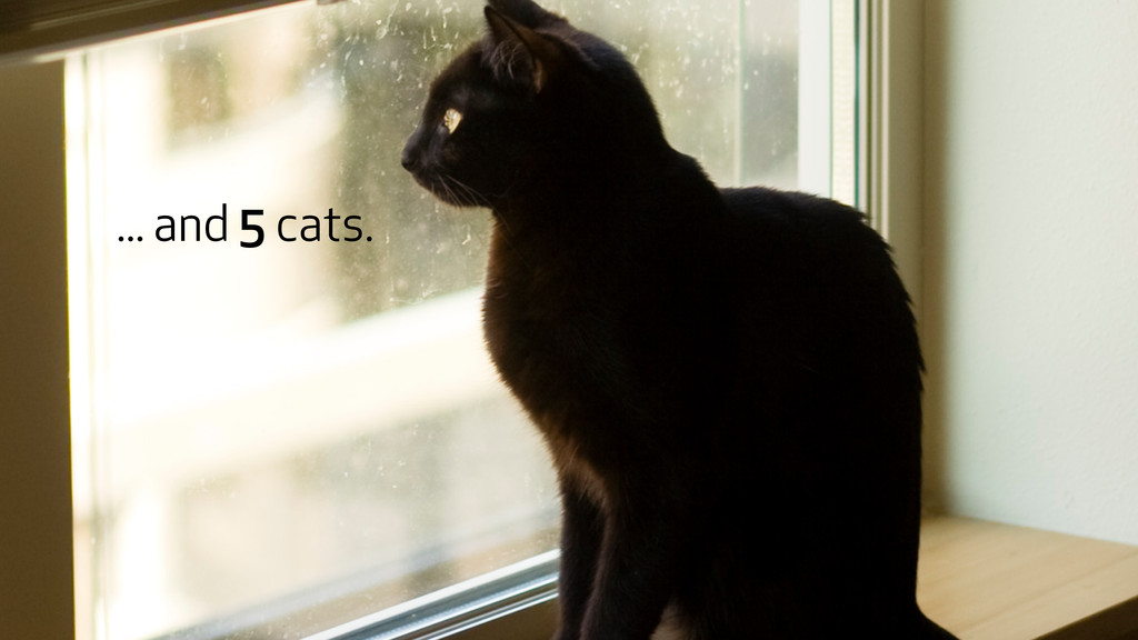 ... and 5 cats.