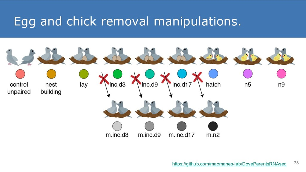 Egg and chick removal manipulations. 23 https:/...