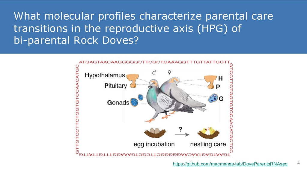 What molecular profiles characterize parental c...