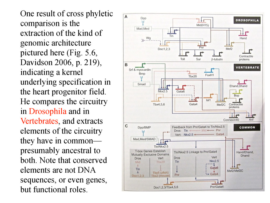 One result of cross phyletic comparison is the ...