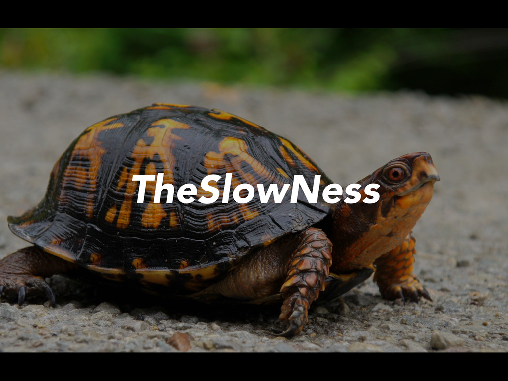 TheSlowNess