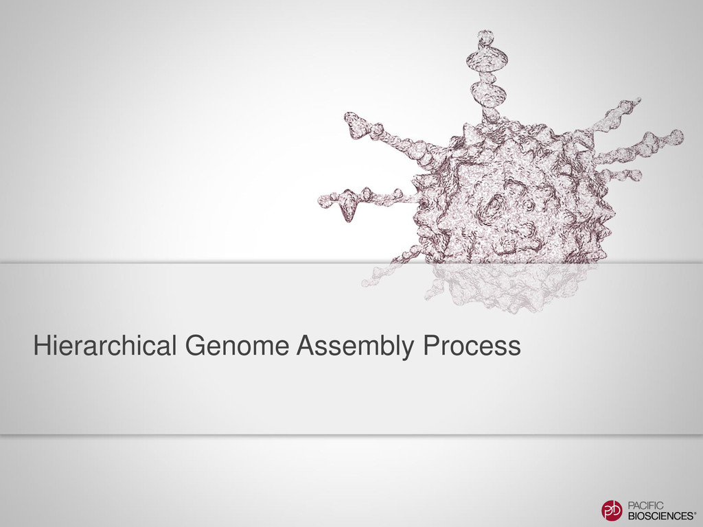 Hierarchical Genome Assembly Process