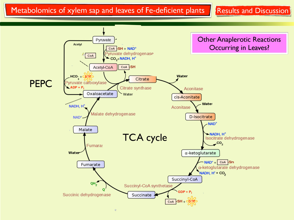 PEPC TCA cycle Results and Discussion Metabolom...