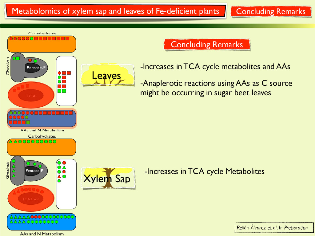 Glycolysis TCA Cycle Carbohydrates AAs and N Me...