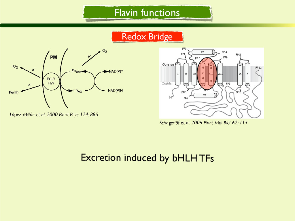 Flavin functions cently characterized in Arabid...