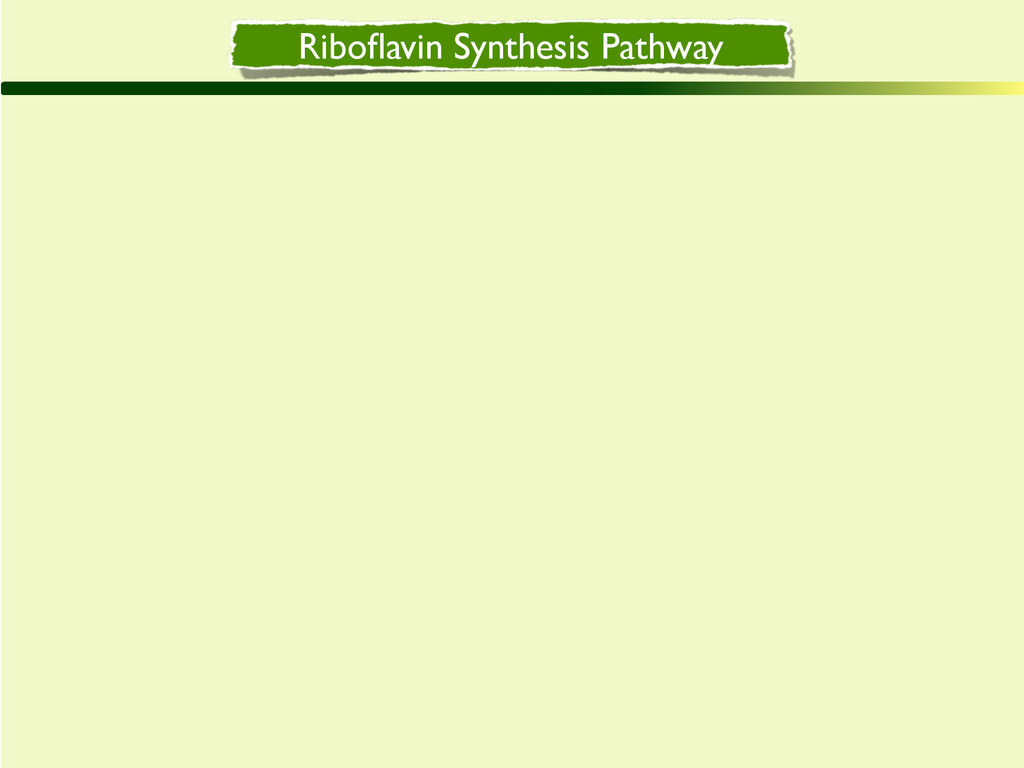 Riboflavin Synthesis Pathway