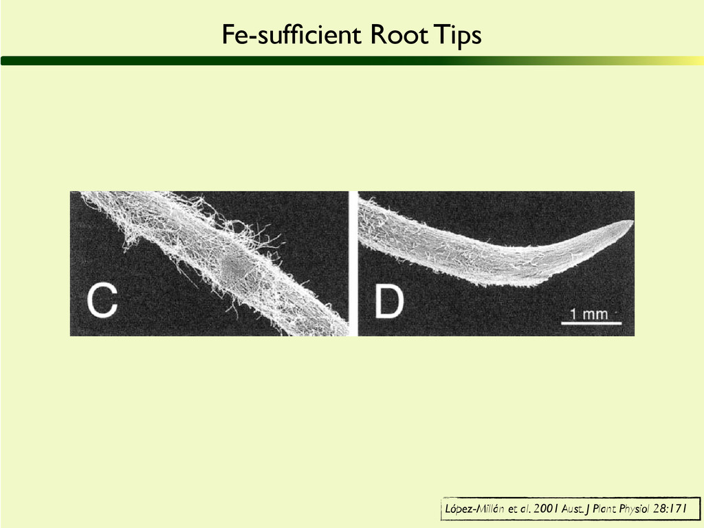 Figure 1. Scanning electron micrographs showing...