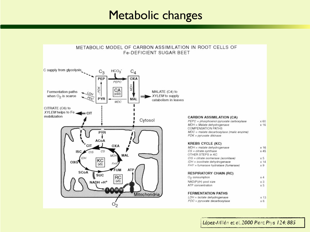 Metabolic changes López-Millán et al. 2000 Plan...