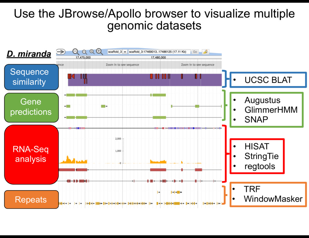 Use the JBrowse/Apollo browser to visualize mul...