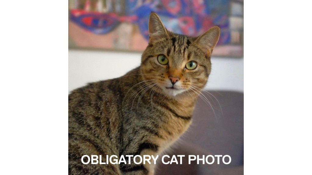 OBLIGATORY CAT PHOTO