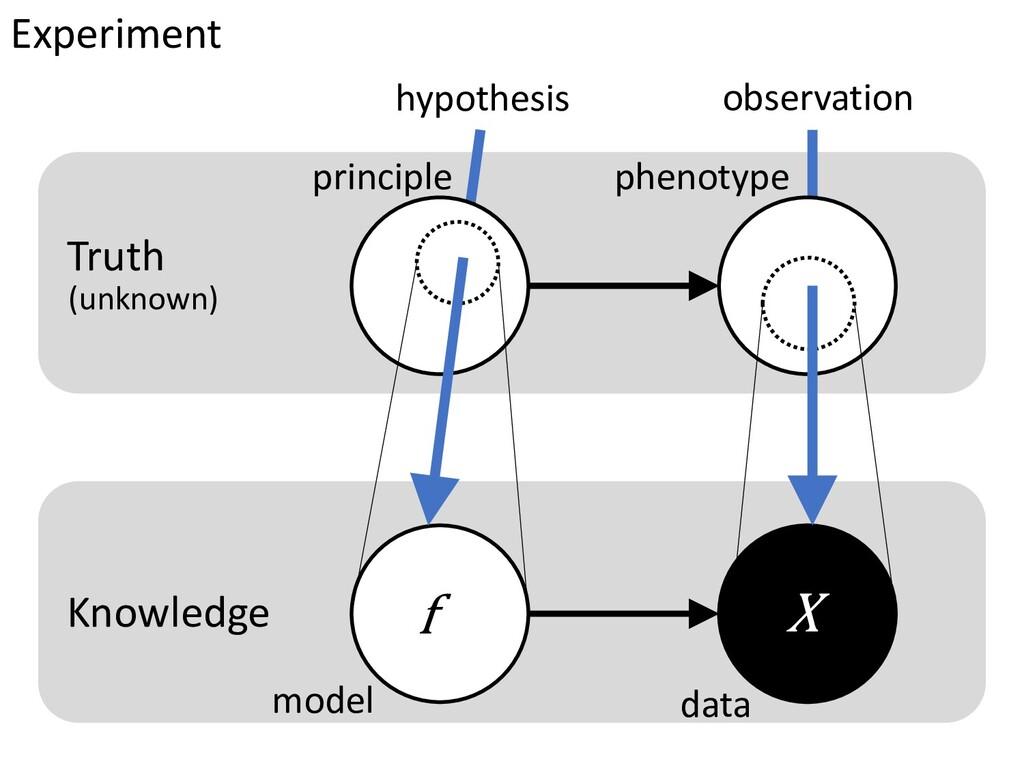 Experiment hypothesis observation principle phe...