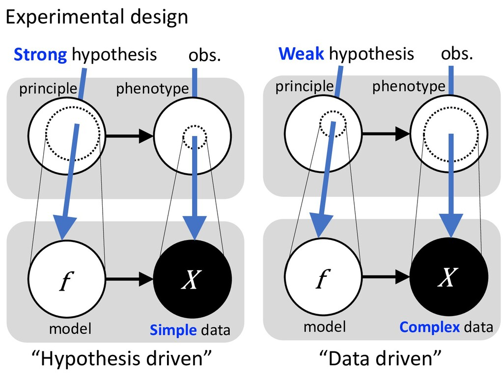 Strong hypothesis obs. principle phenotype f We...