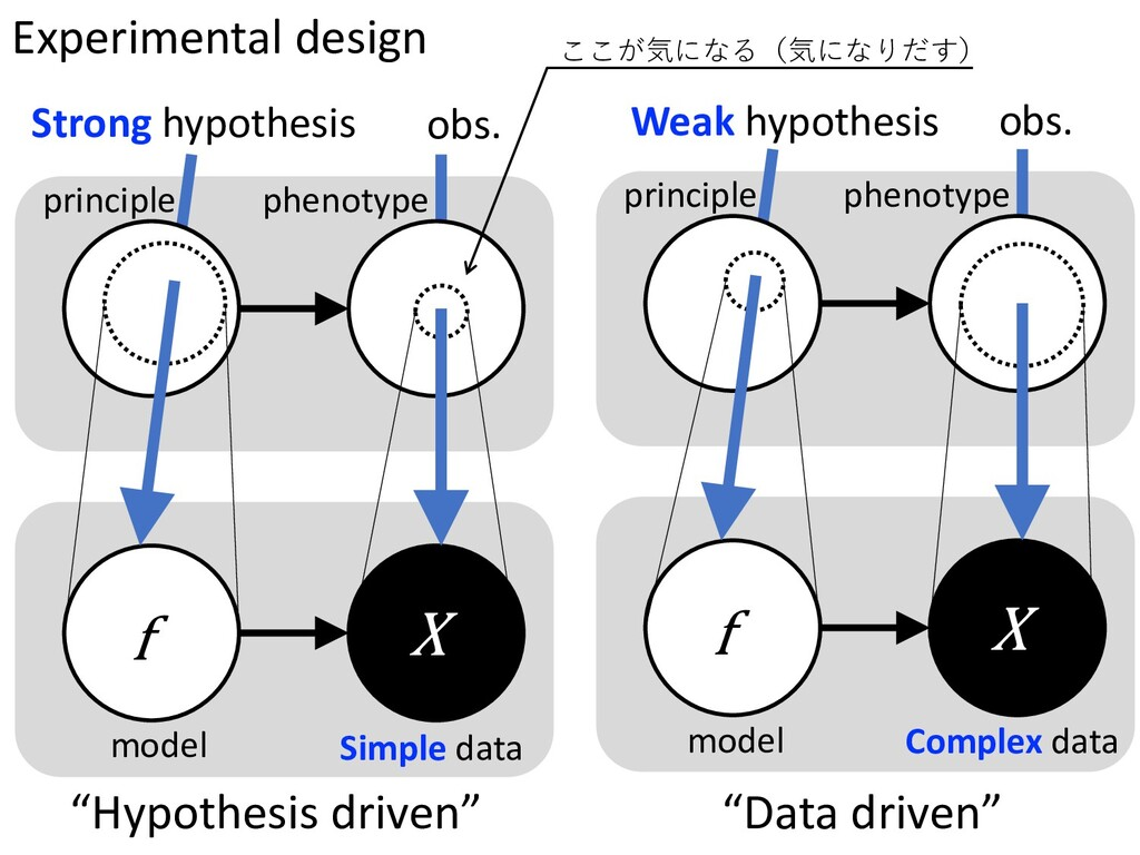 Strong hypothesis obs. principle phenotype f X ...