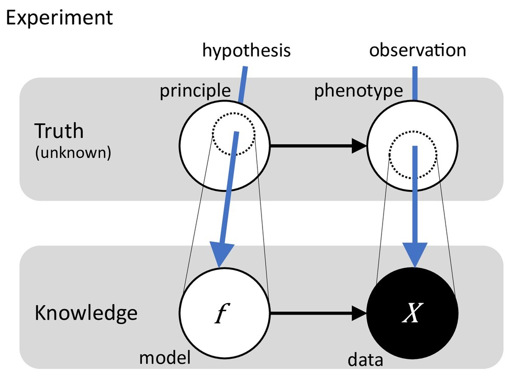 Experiment hypothesis observa$on principle phen...