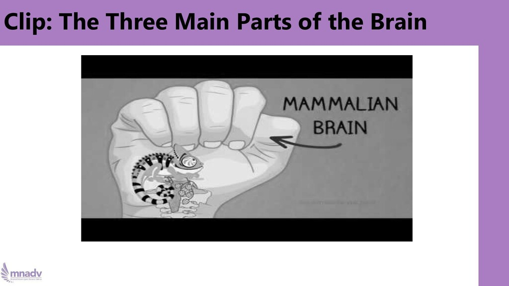 Clip: The Three Main Parts of the Brain