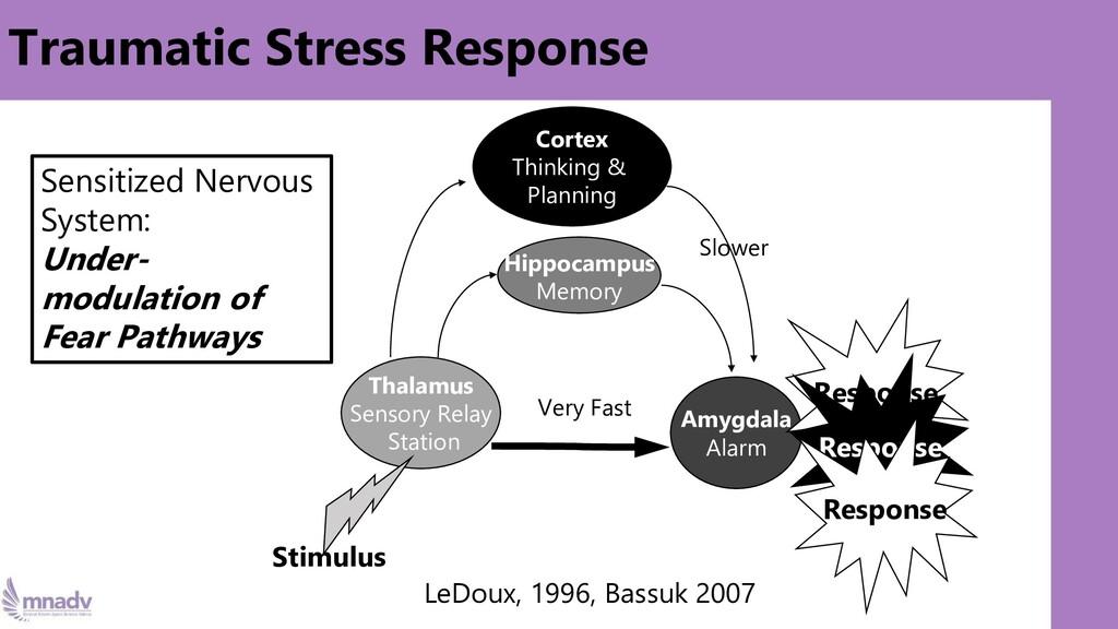 Traumatic Stress Response Stimulus Thalamus Sen...