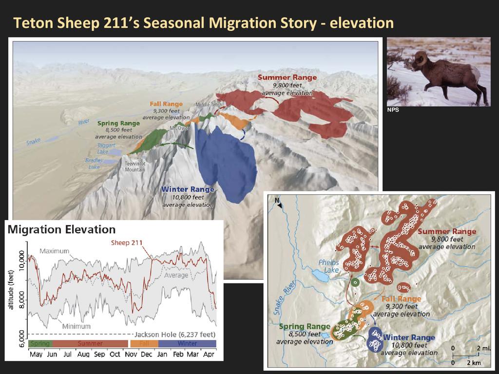 Teton Sheep 211's Seasonal Migration Story - el...