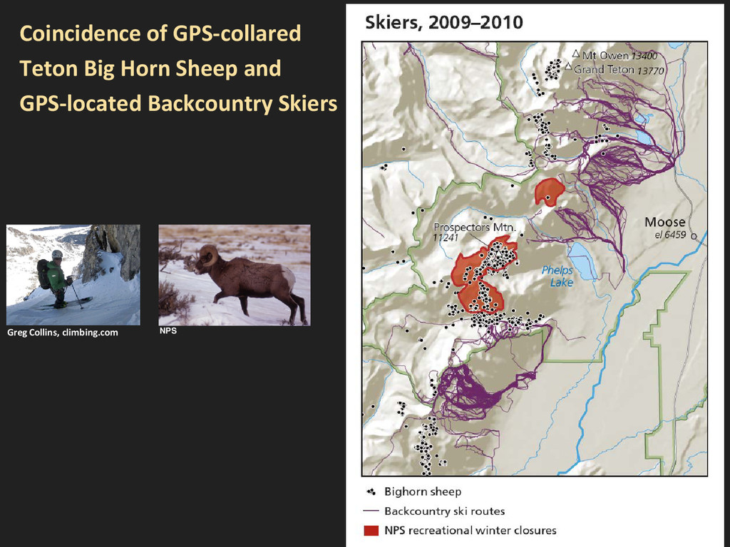 Coincidence of GPS-collared Teton Big Horn Shee...