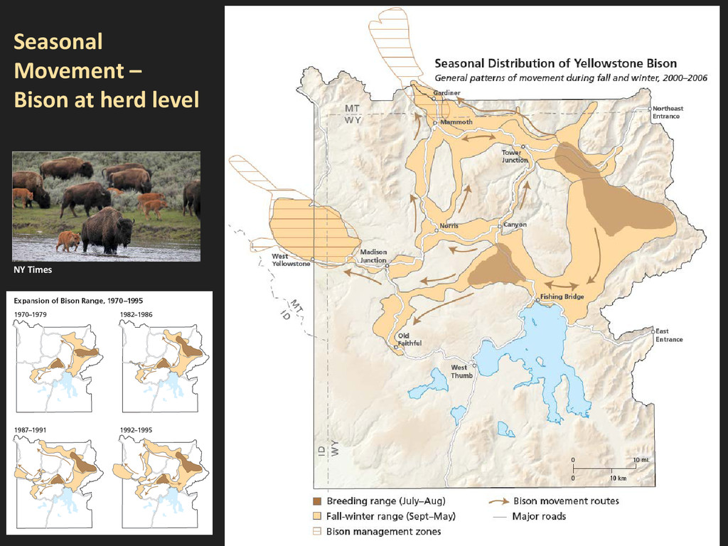 Seasonal Movement – Bison at herd level NY Times