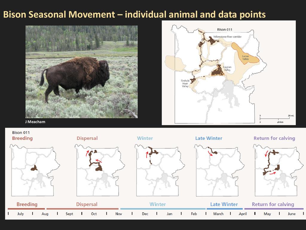Bison Seasonal Movement – individual animal and...