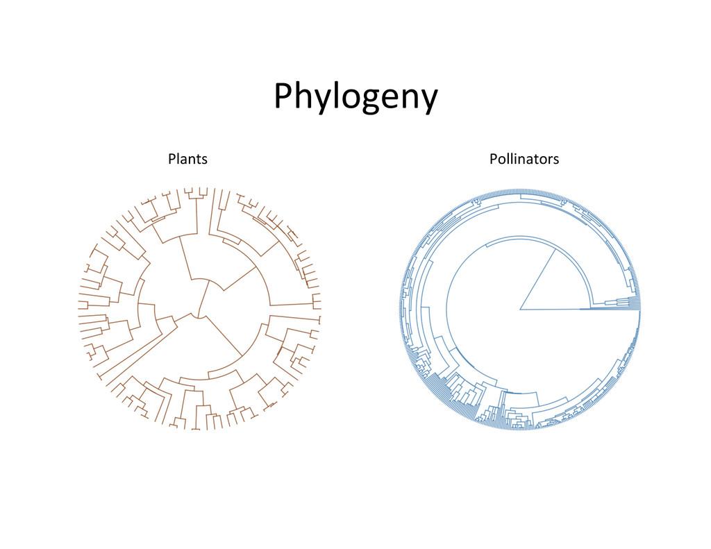 Phylogeny  Plants  Pollinators