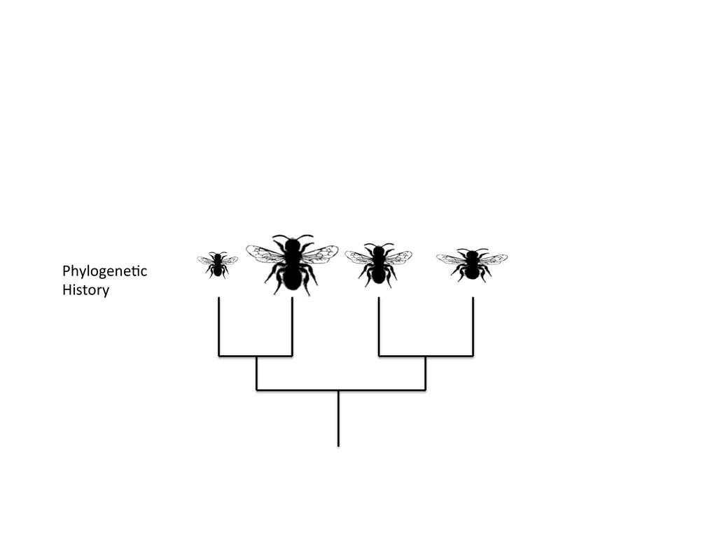 Phylogene)c  History