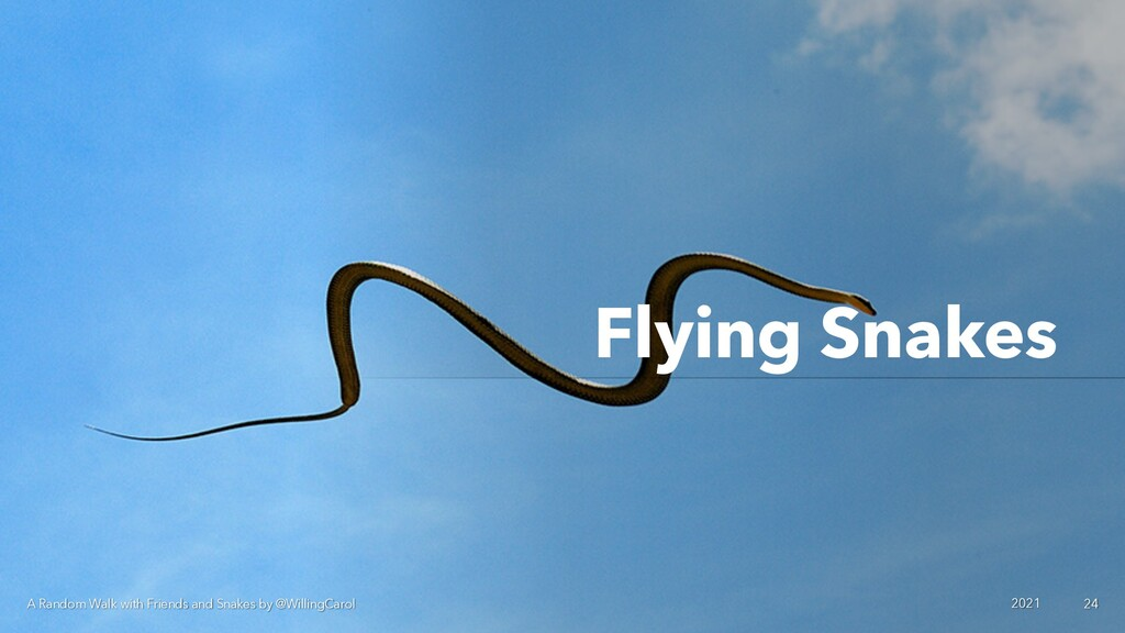 Flying Snakes A Random Walk with Friends and Sn...