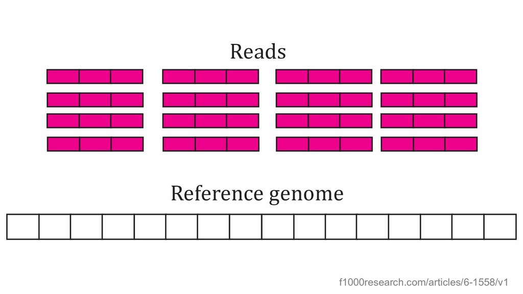Reference genome Reads f1000research.com/articl...