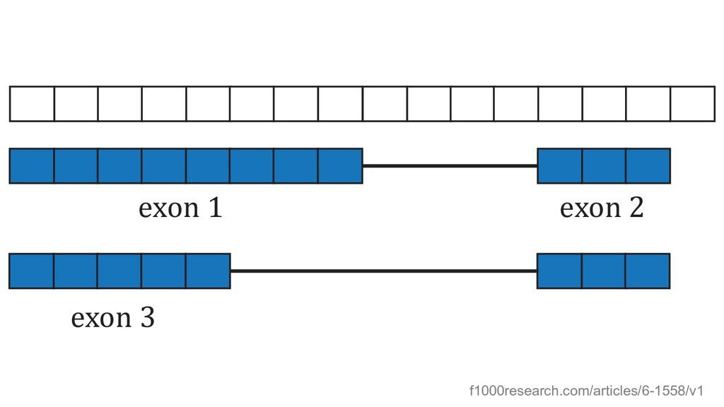 exon 1 exon 2 exon 3 f1000research.com/articles...