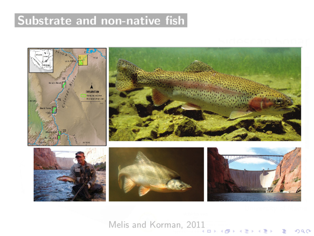 Substrate and non-native fish Melis and Korman, ...