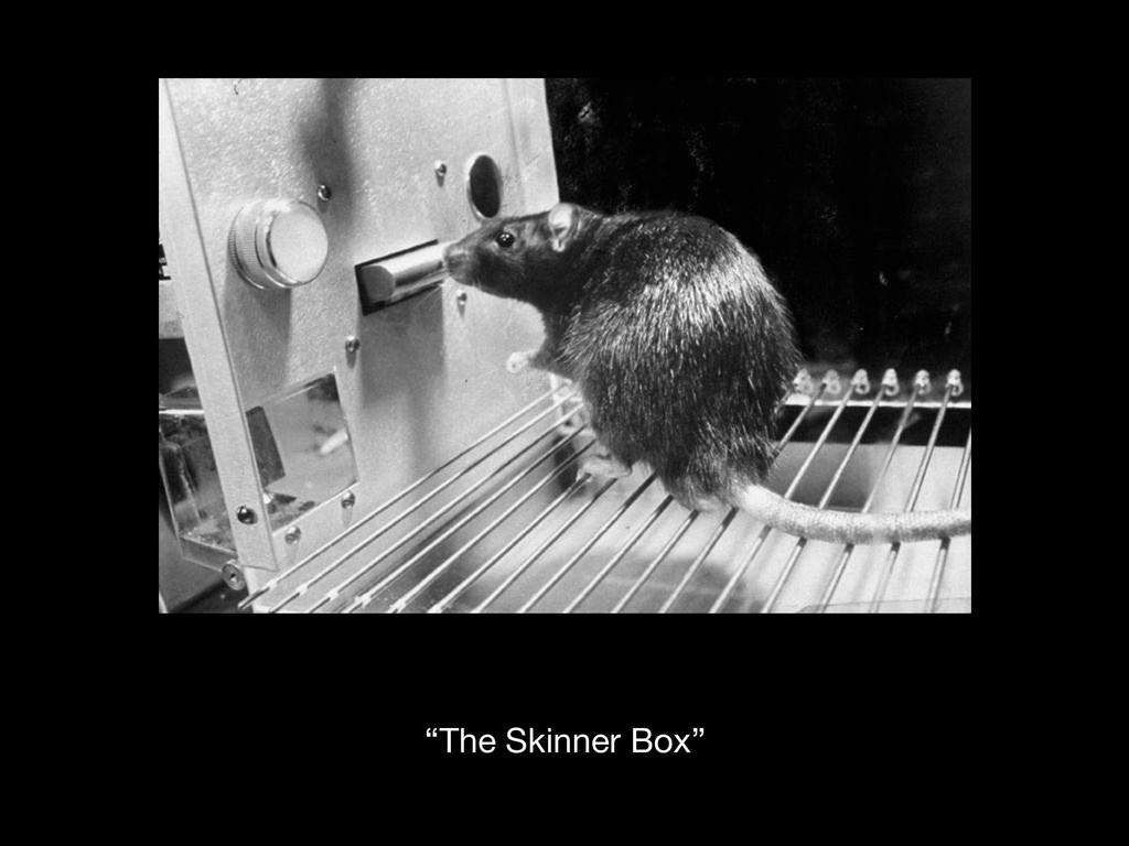 """""""The Skinner Box"""""""