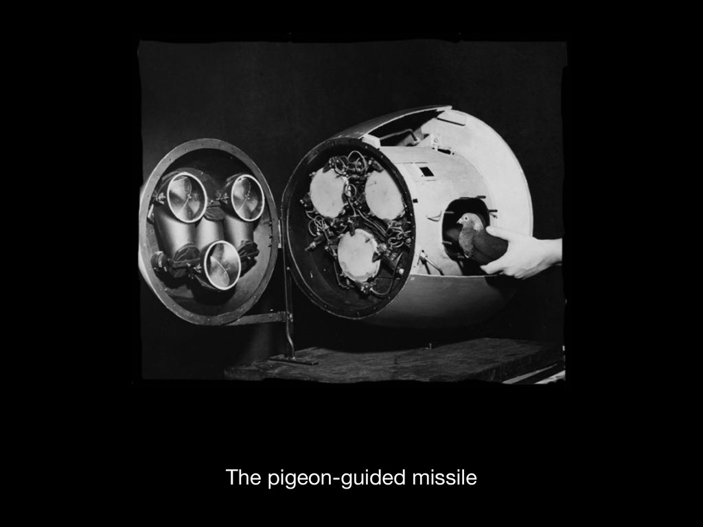 The pigeon-guided missile