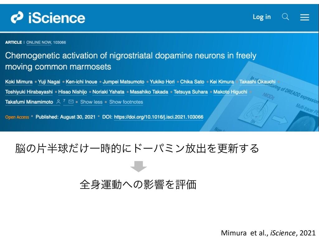 Mimura et al., iScience, 2021 ͷยٿ͚ͩҰతʹυʔύϛϯ์...