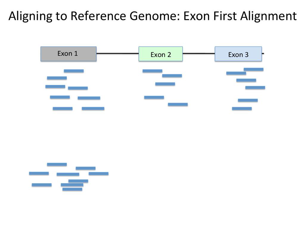 Exon 2  Exon 3  Exon 1  Align...