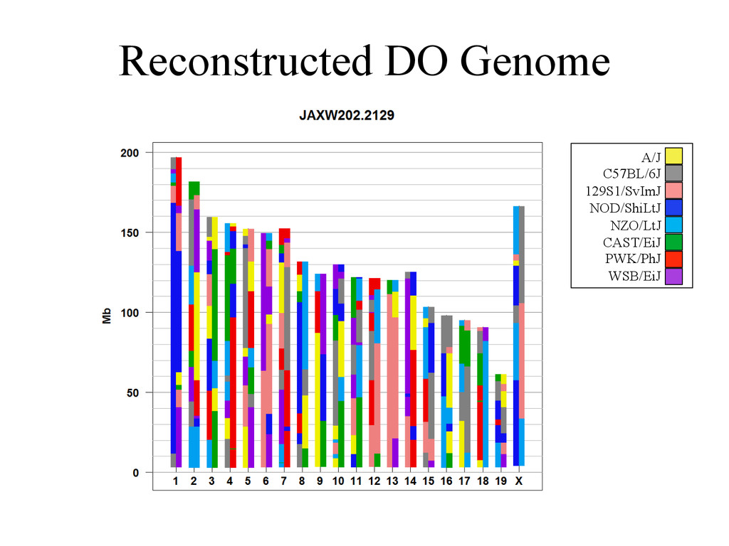 Reconstructed DO Genome A/J C57BL/6J 129S1/SvIm...