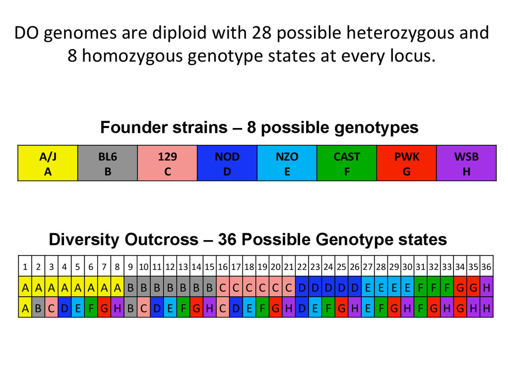 DO genomes are diploid with 28...