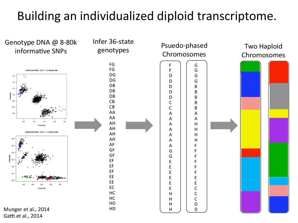 Building an individualized diploid ...
