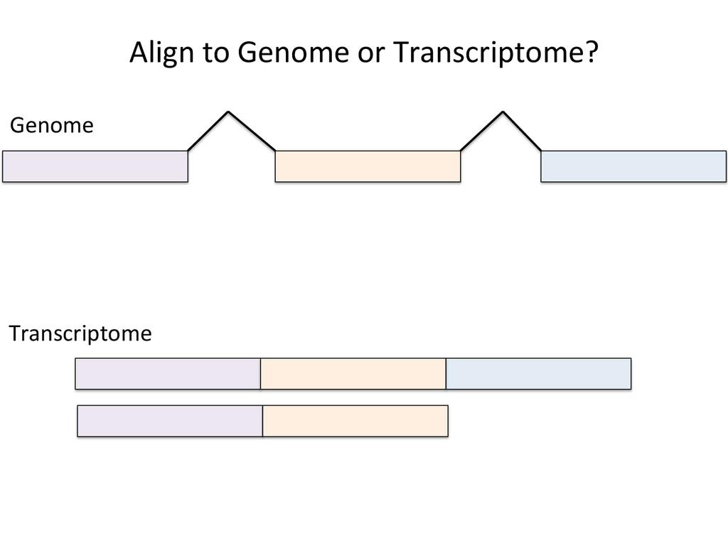 Align to Genome or Transcriptome?...