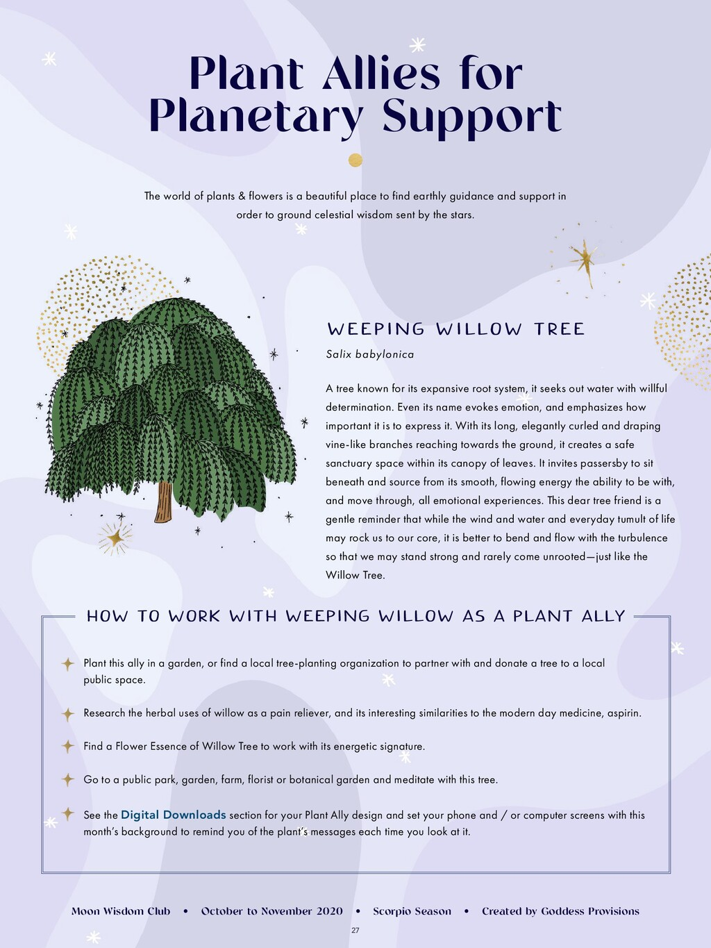 27 Plant Allies for Planetary Support The world...