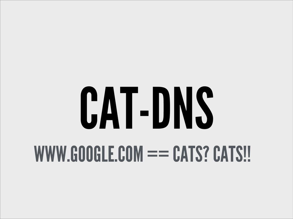 CAT-DNS WWW.GOOGLE.COM == CATS? CATS!!