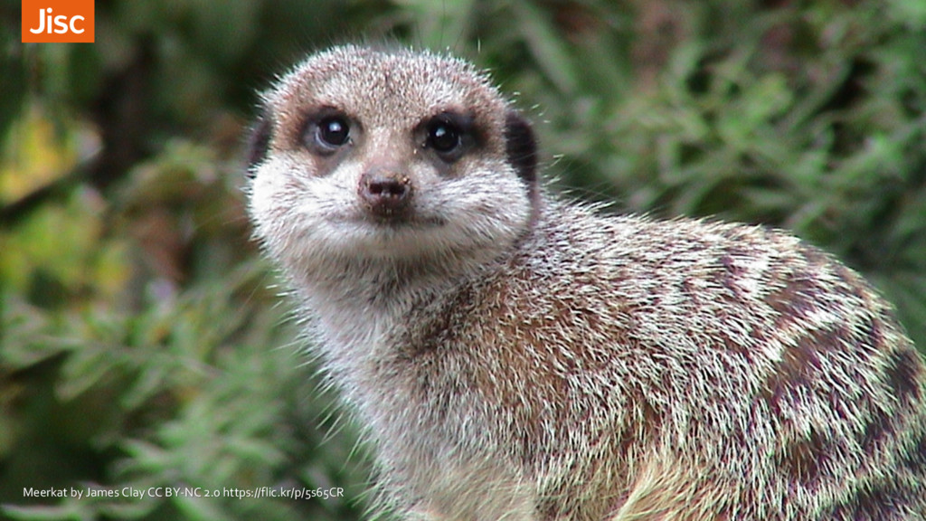 Meerkat by James Clay CC BY-NC 2.0 https://flic...
