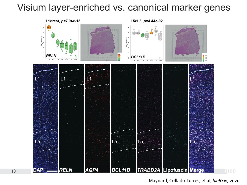 Visium layer-enriched vs. canonical marker gene...