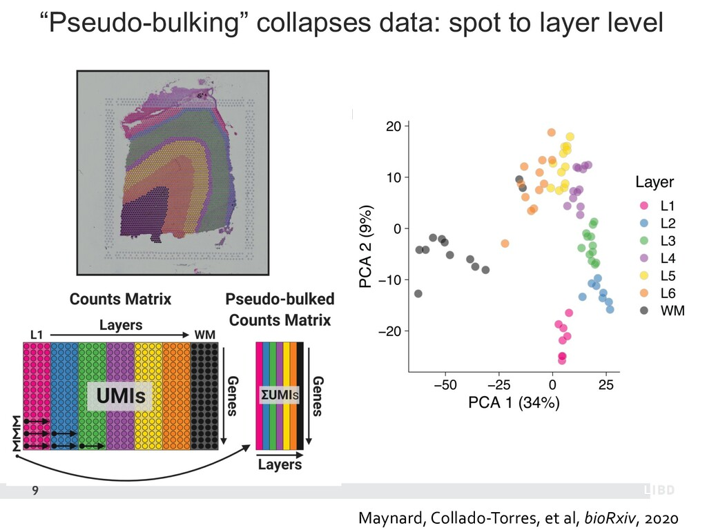 """Pseudo-bulking"" collapses data: spot to layer ..."