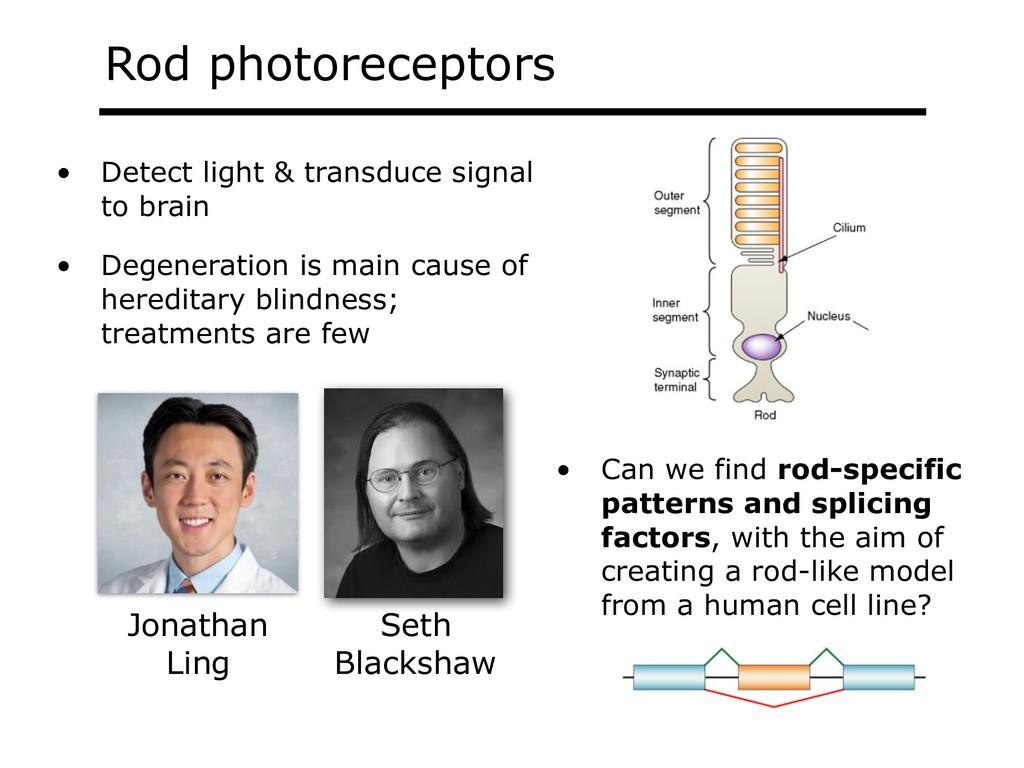 Rod photoreceptors Jonathan Ling Seth Blackshaw...