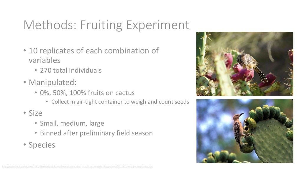 Methods: Fruiting Experiment • 10 replicates of...