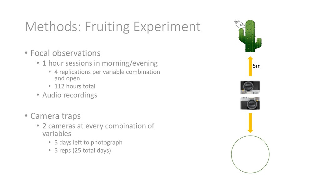Methods: Fruiting Experiment • Focal observatio...