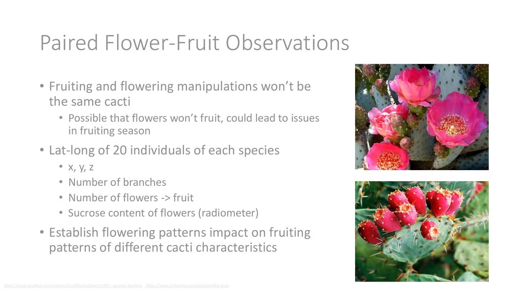 Paired Flower-Fruit Observations • Fruiting and...