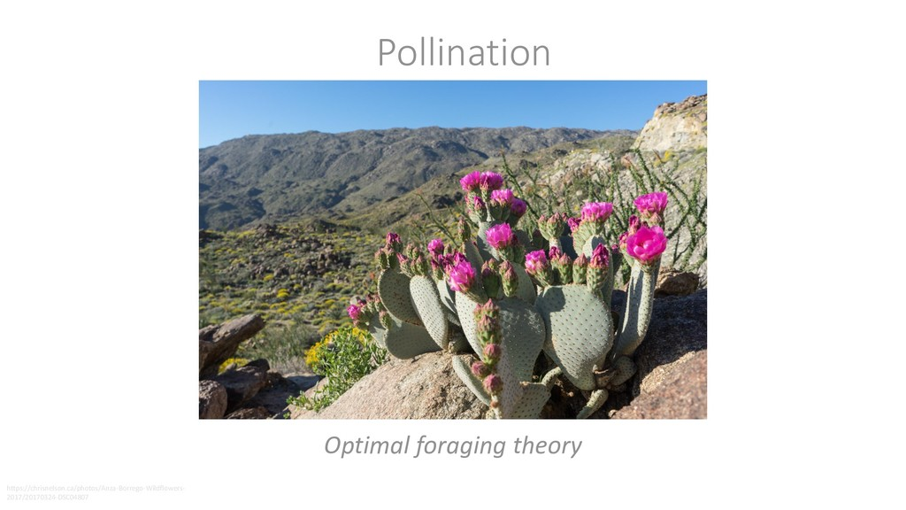 Pollination Optimal foraging theory https://chr...