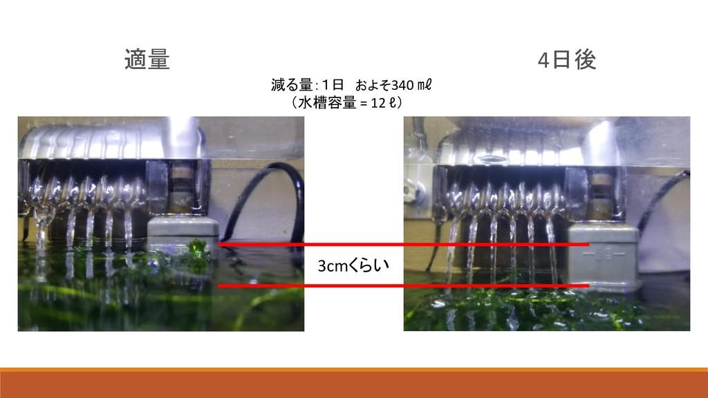 適量 4日後 3cmくらい 減る量:1日 およそ340 ㎖ (水槽容量 = 12 ℓ)